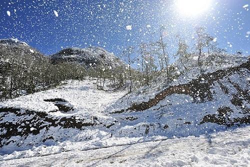 Tuyết rơi phủ trắng vùng rừng núi Sapa