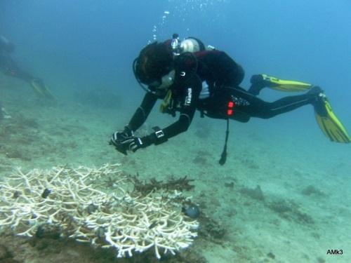 Lặn biển ngắm san hô là một hoạt động được yêu thích ở Cát Bà