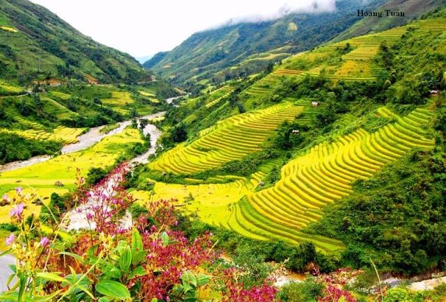 Thung lũng mường Hoa