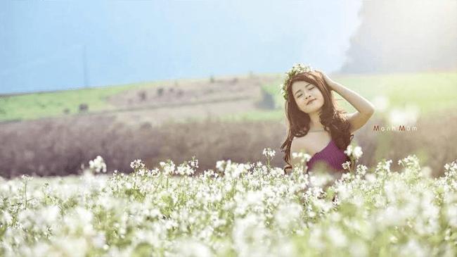 Cô gái chụp ảnh với hoa cải
