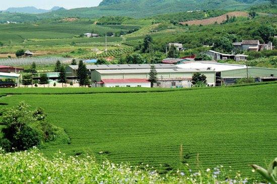 Nhà máy sản xuất chè