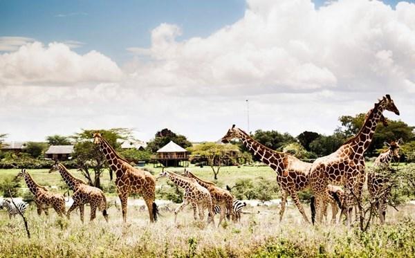 Safari Phú Quốc- vườn thú bán hoang dã đầu tiên và duy Safari Phú Quốc- vườn thú bán hoang dã đầu tiên và duy nhất tại Việt Namnhất tại Việt Nam