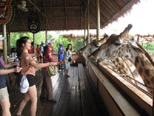 Safari Phú Quốc điểm du lịch hấp dẫn dành cho du khách